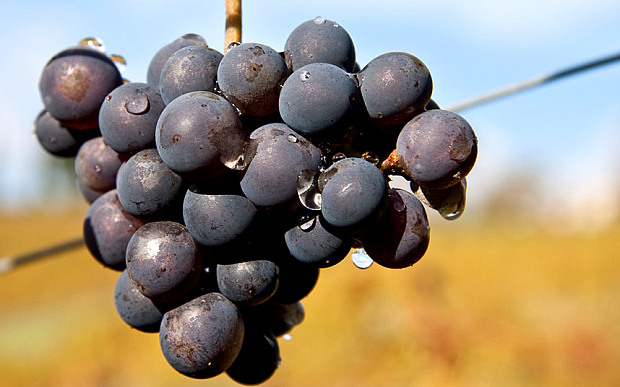 wet-grapes_3033966b.jpg